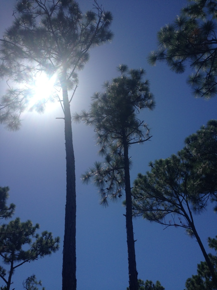 Under the Abaco Pines and the sharp sun