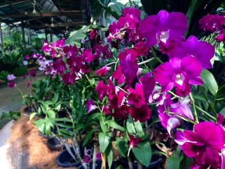 International Orchid Garden