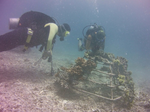 Two guys from the fisheries team examine a coral frame. I was the only woman, which sometimes posed a problem for their rather stern supervisor.