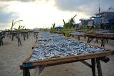 fish drying out on the beach